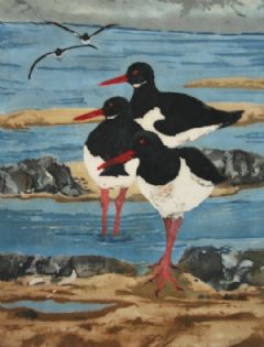 Image entitled Oystercatchers Flying In