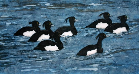 Image entitled Tufted Ducks