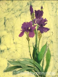 Image entitled Irises