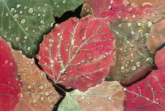Image entitled Raindrops on Leaves